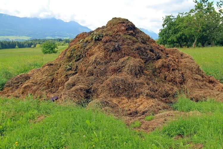 More Compost